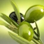 オリーブオイルの効能と副作用~アンチエイジング効果の5つの成分~