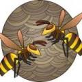 スズメバチ3